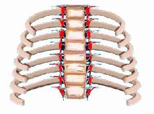 Sympathikus Nerv im Brustraum